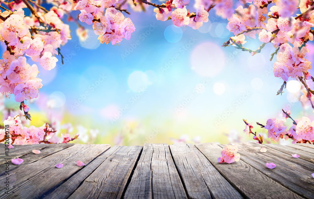 Fototapeta Spring Display - Pink Blossoms On Wooden Table