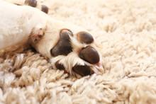 Macro Of White Dog Paw