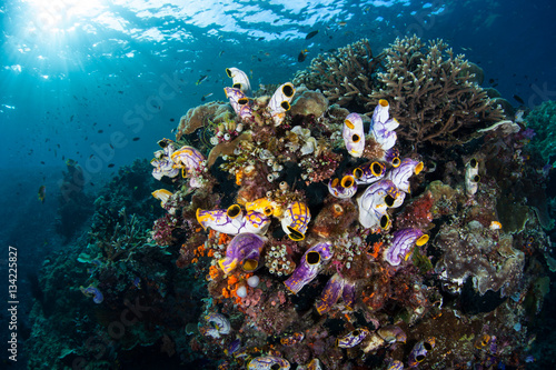 Poster Sous-marin Colorful Tunicates and Coral Reef in Raja Ampat