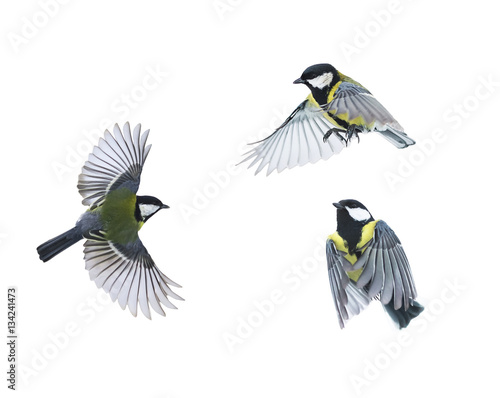 Ingelijste posters Vogel a small bird flies on white isolated background in various poses