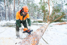 Lumberjack Cutting Tree In Sno...