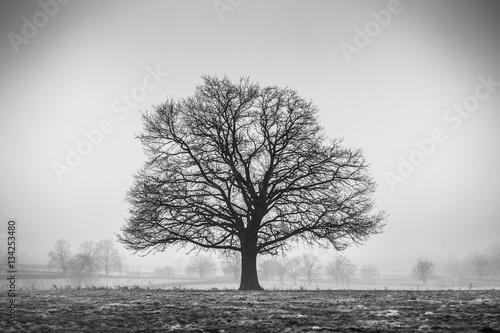 Photo  arbre de l' hiver