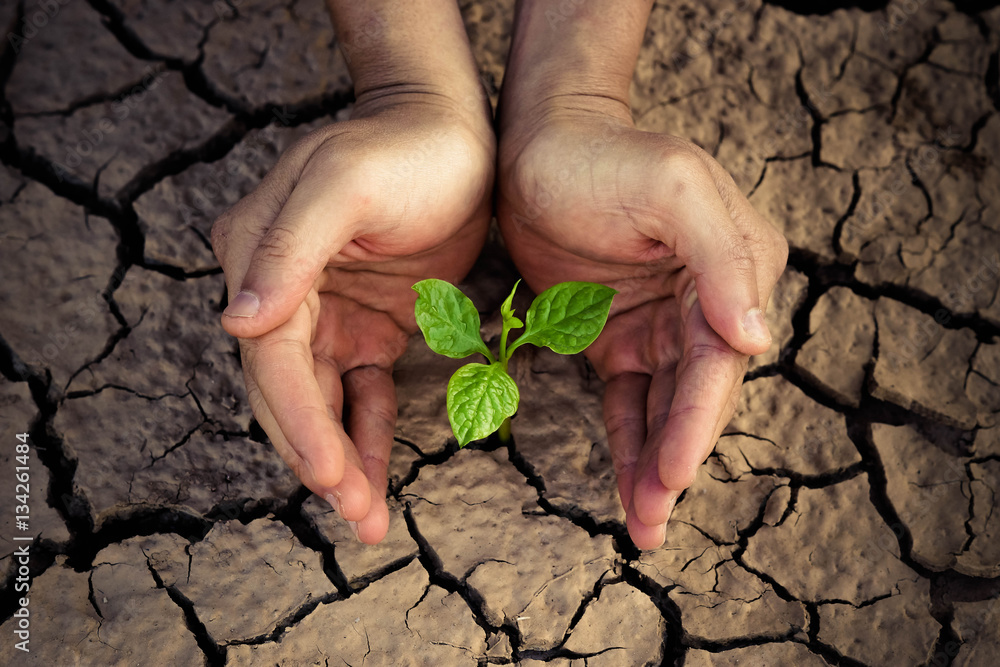 Fototapeta Love and protect nature. Hands holding a tree growing on cracked ground. Save the world. Environmental problems. Growing tree.
