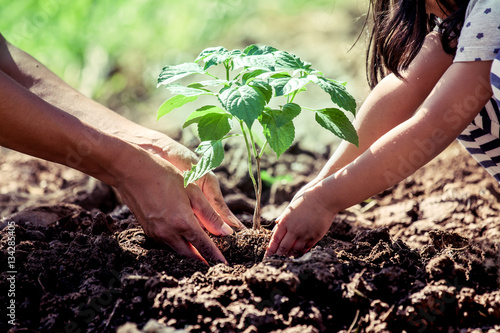 Fotografie, Obraz  Asian little girl helping his father to plant the tree