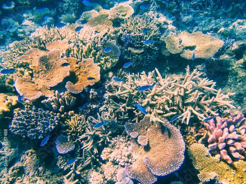 Tuinposter Koraalriffen Coral reef in Somosomo Strait off the coast of Taveuni Island, F