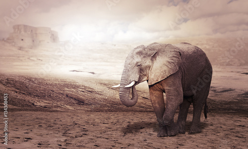 Foto op Aluminium Olifant african elephant in desert