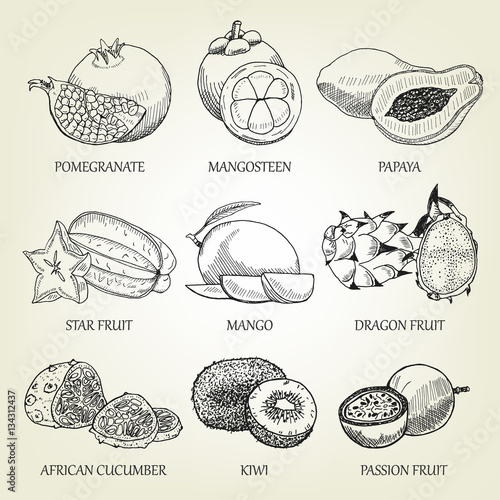 Hand drawn set of different tropical fruits  Outline realistic icons
