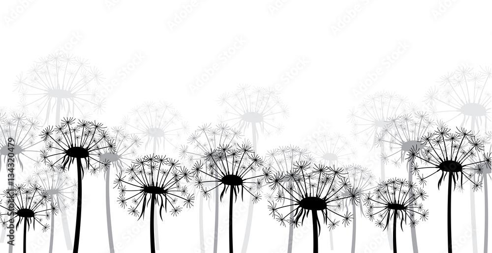 Fototapety, obrazy: White background with dandelions.