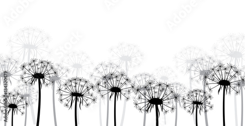 White background with dandelions.