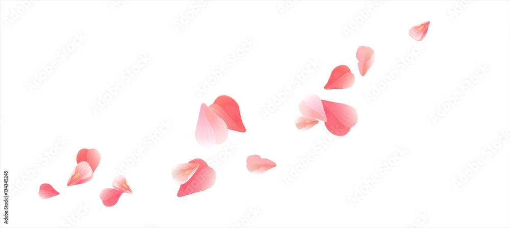 Fototapeta Pink Red flying petals isolated on white. Sakura Roses petals. Vector