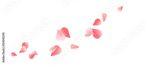 Obraz Pink Red flying petals isolated on white. Sakura Roses petals. Vector  - fototapety do salonu