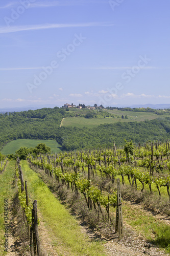 Foto  Vineyard in the Chianti
