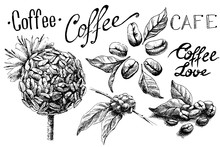 Set Of Coffee Beans And Leaves...