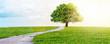 canvas print picture - Weg mit Baum.
