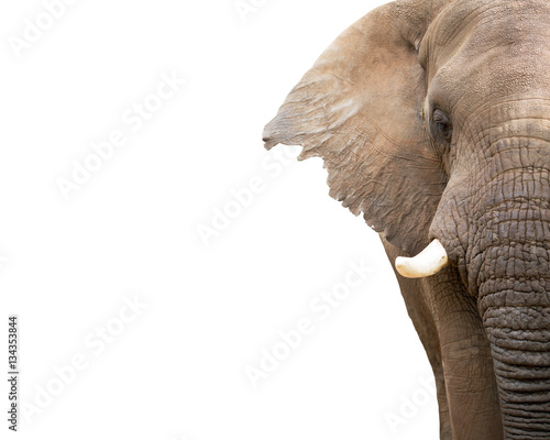 Foto op Aluminium Olifant Elephant Closeup Cropped With Copy Space