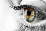 Colorful iris of the human eye with black and wite surrounding