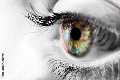 Foto op Plexiglas Iris Colorful iris of the human eye with black and wite surrounding