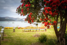 Ocean Landscape With Blooming Pohutukawa Tree With Red Flowers, The Tree Endemic To New Zealand And Blooming Around Christmas Time