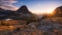 Mountain Goat And Setting Sun In Glacier National Park