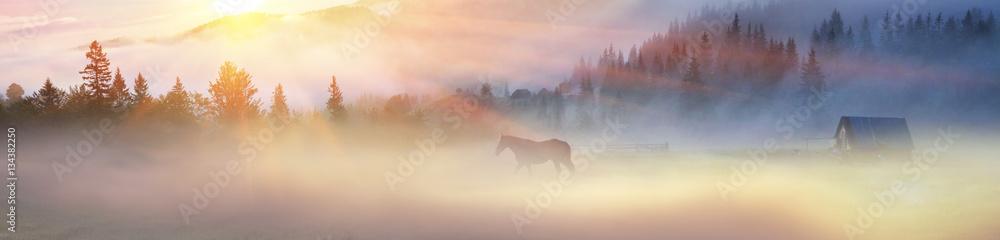 Obraz A horse grazes in the fog fototapeta, plakat
