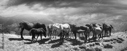 Obraz na płótnie Horses on the mountain top