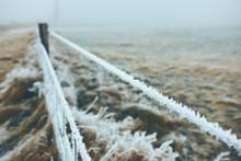 Frozen Steel Wire