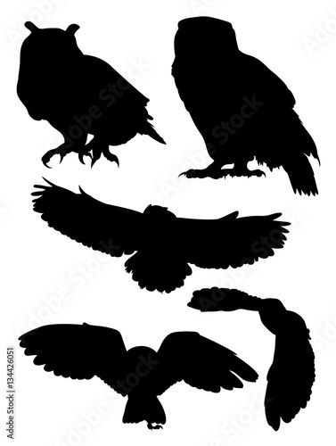 Canvas Prints Owls cartoon Owls birds silhouette. Good use for symbol, logo, mascot, web icon, sign, or any design you want.