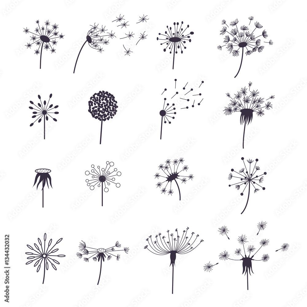 Fototapety, obrazy: Dandelion Fluffy Flower and Seeds Set. Vector
