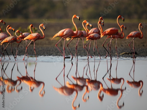 Spoed Fotobehang Flamingo A flock of flamingo