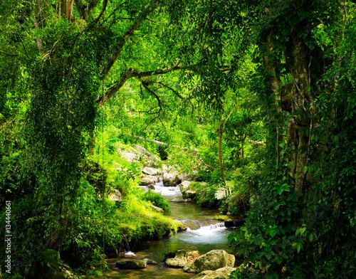 Poster Rivière de la forêt Stream flowing through dark forest