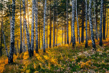 Autumn Sunset In The Siberian Taiga.