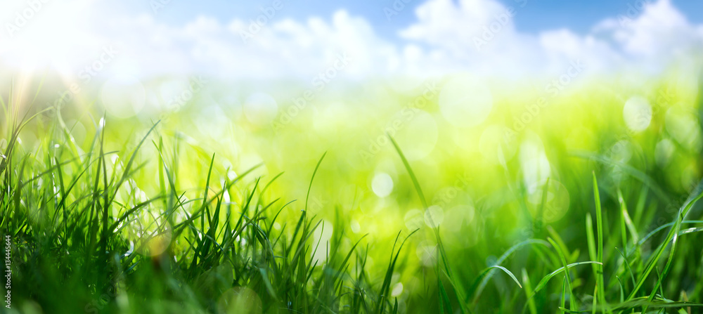 Fototapeta art abstract spring background or summer background with fresh g
