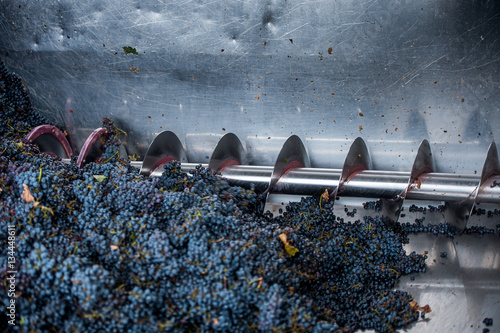Stampa su Tela grape processing on the machine