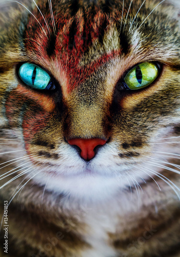 A creative portrait of a cat with a lightning bolt painted on its face Poster