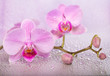 orchid flowers on wet background.