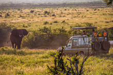 Elephant Attacks A Jepp In The Natural Reserve Of Tsavo