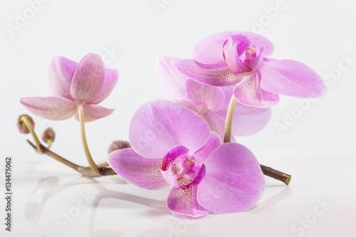 kwiaty-orchidei-spa-delikatny-roz