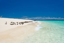 Michaelmas Cay Off Cairns On T...