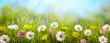 Fototapeta Kwiaty - Spring flower in the meadow