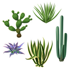 Cactuses And Succulents Set. P...