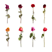 Dried Roses Of Different Colors