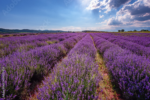 Printed kitchen splashbacks Cappuccino Daily cloudy landscape with lavender in the summer at the end of June. Contrasting colors, beautiful clouds, dramatic sky.