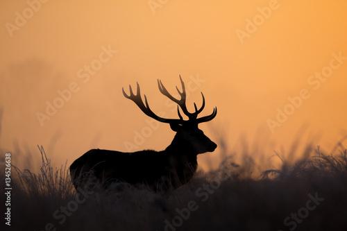 Deurstickers Hert Deers