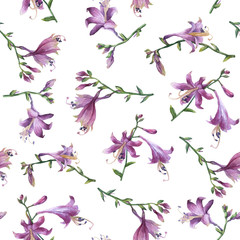 Fototapeta Łąka Seamless pattern with branch of purple hosta flower. Lilies. Hosta ventricosa minor, asparagaceae family. Hand drawn watercolor painting on white background.
