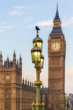 Fototapeta Big Ben - Raven on lampost at Houses of Parliament in early winter morning