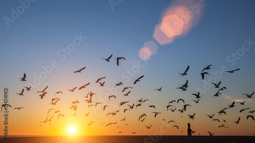 Fényképezés Silhouettes flock of birds over the Atlantic ocean during sunset