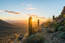 Sunset In Saguaro National Park West
