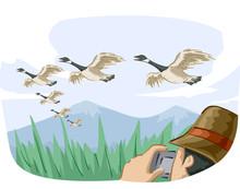 Bird Canadian Geese Migrate Ph...