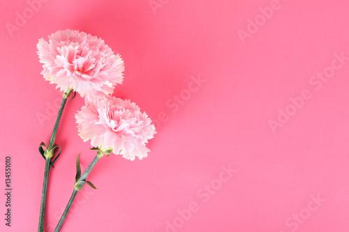 Photo  Beautiful carnation