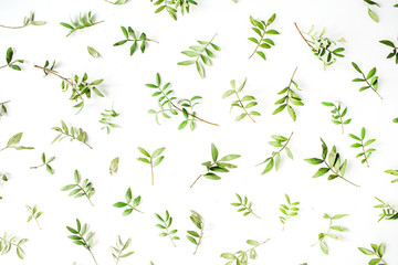 Fototapeta Na sufit Green branches and leaves on white background. Flat lay, top view